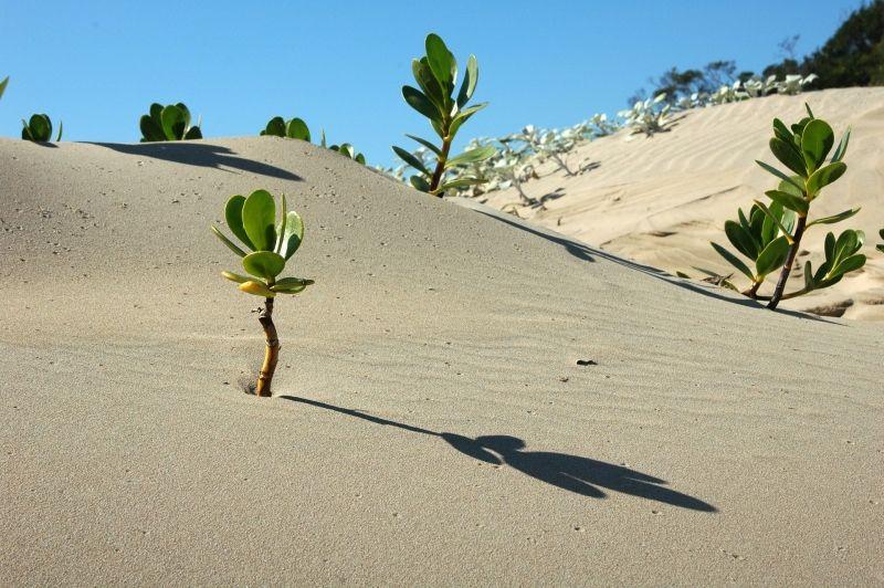 Resiliencia adaptacion al cambio