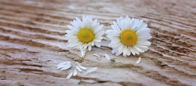 estoy-enamorada-primavera