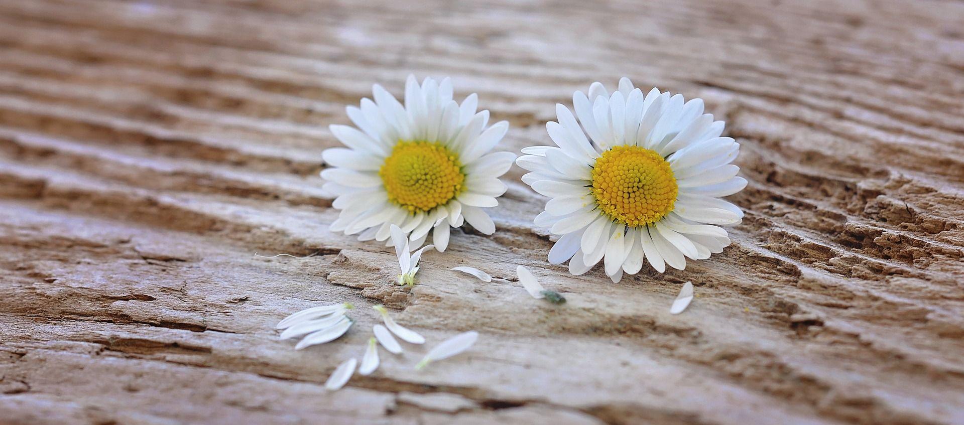floweestoy-enamorada-primavera